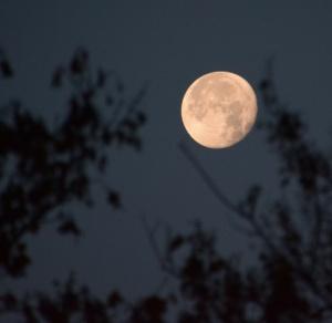 bore-moon