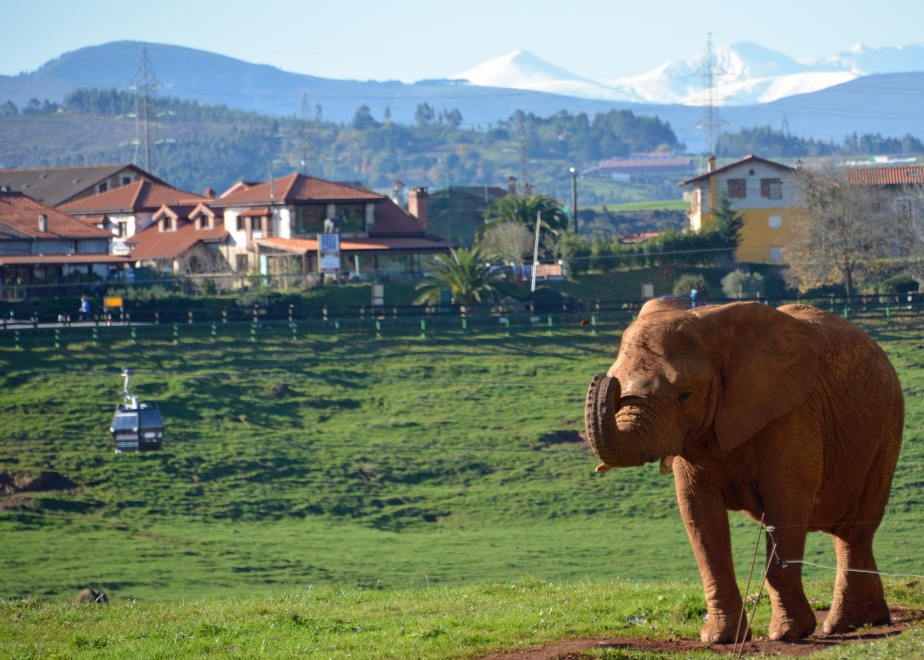 elephant-and-mountains